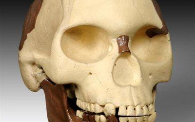 El célebre hombre de Piltdown resultó ser uno de los fraudes más grandes de la historia científica.