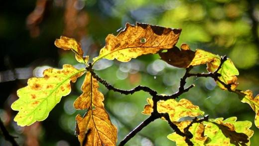 Deberíanse conservar as árbores autóctonas no entorno dos xacementos galegos?