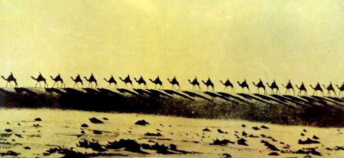 Caravana de camellos, desierto Sahara