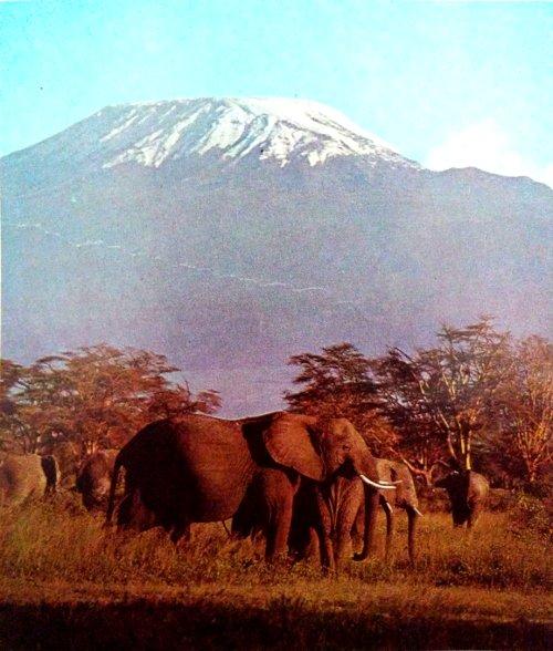 Monte Kilmanjaro África y elefantes africanos