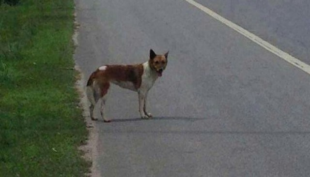 Cão comove a Internet por se recusar a deixar o local onde foi abandonado pelo dono 1