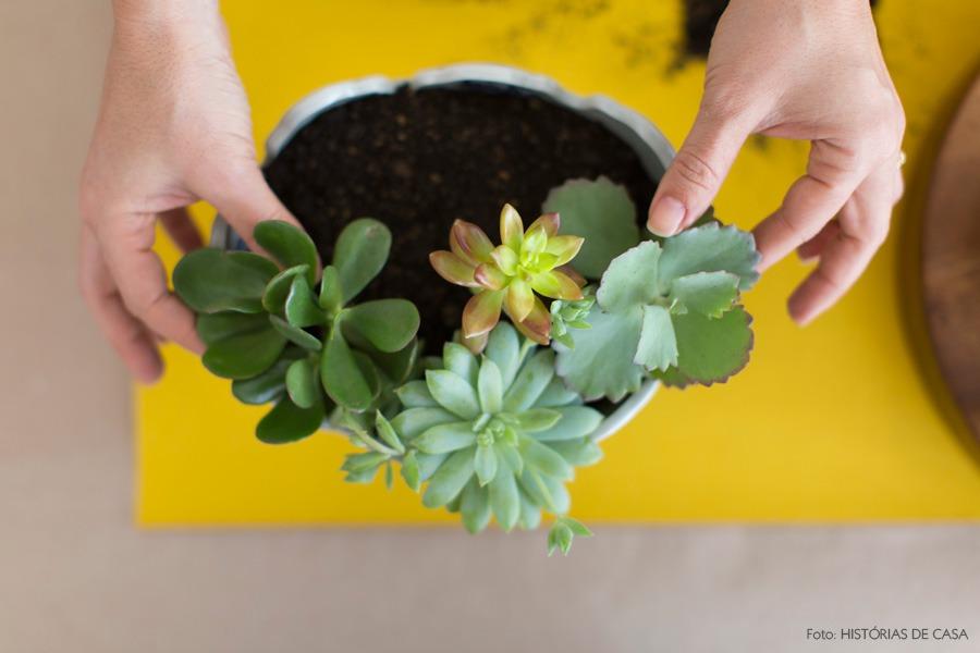 06-decoracao-arranjo-suculentas-plantas
