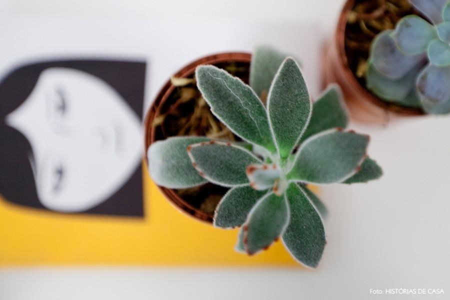 31-decoracao-quarto-suculentas-plantas-vaso-lata-pintada
