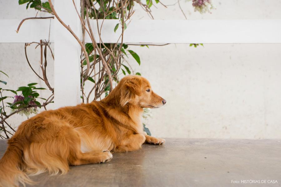 05-decoracao-jardim-piso-cimento-queimado-cachorro