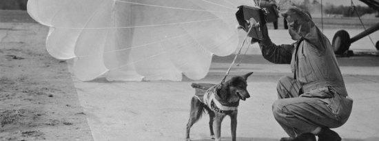 Parachute dog