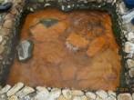 Naciente de las aguas termales