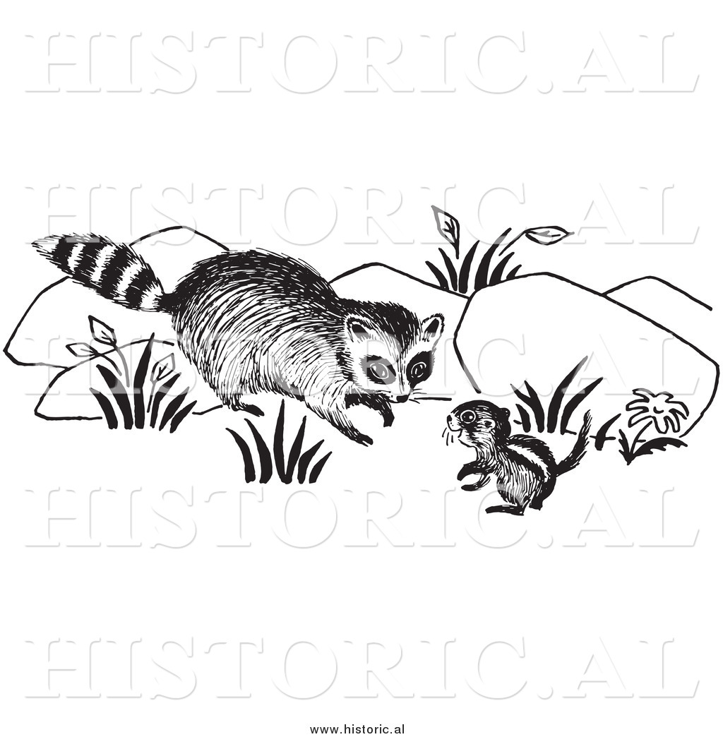 Clipart Of A Raccoon Looking At Chipmunk