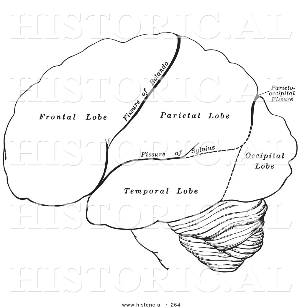 Historical Illustration Of The Hemispheres Of The Human