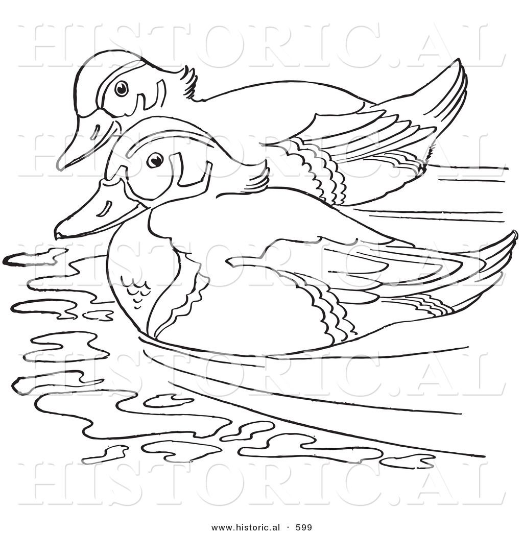 Historical Vector Illustration Of 2 Wood Ducks Swimming