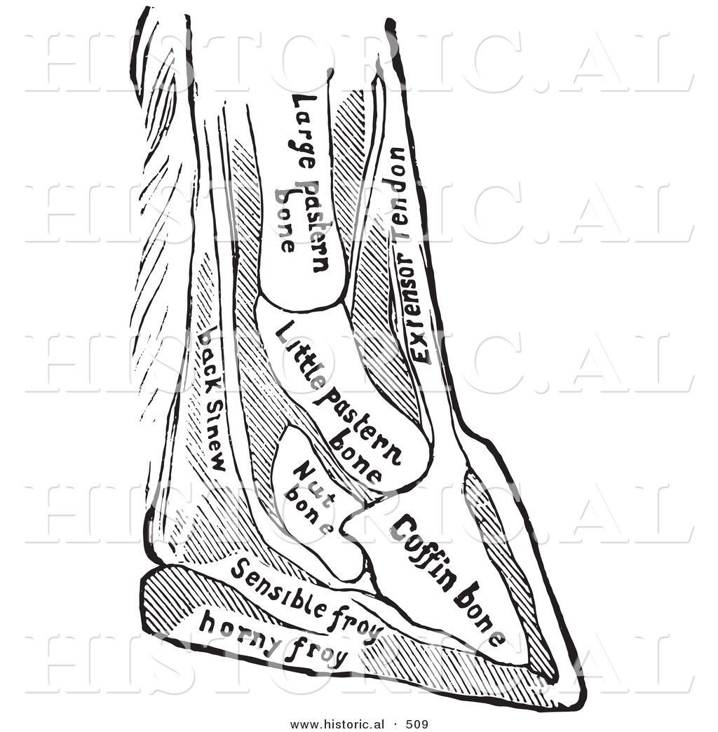 Diagram Feet Acupressure