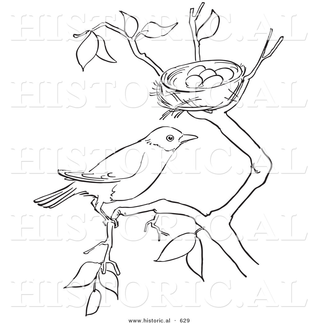 Historical Vector Illustration Of A Robin On A Tree Branch