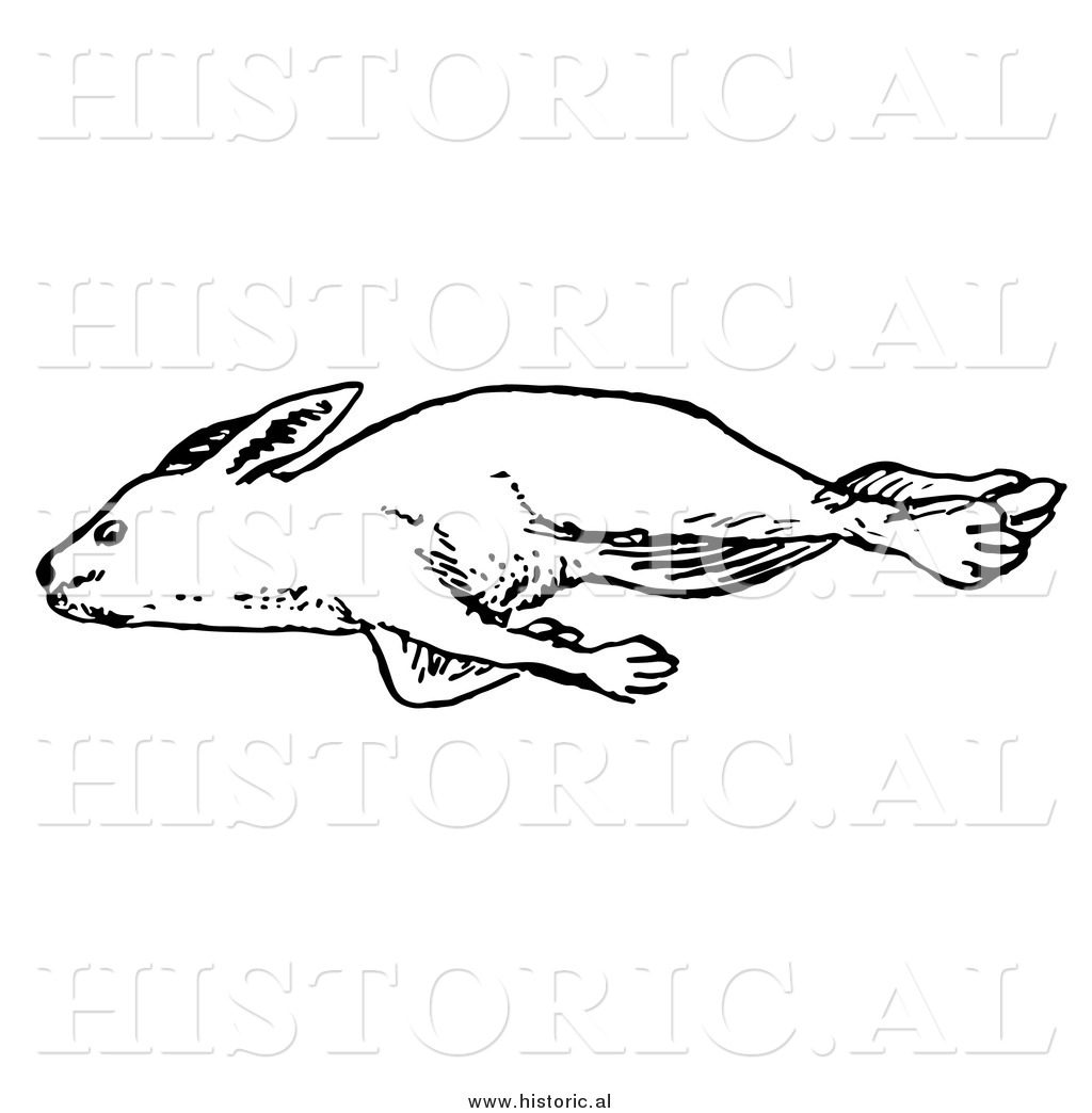 Illustration Of A Dead Rabbit Laying On Its Right Side