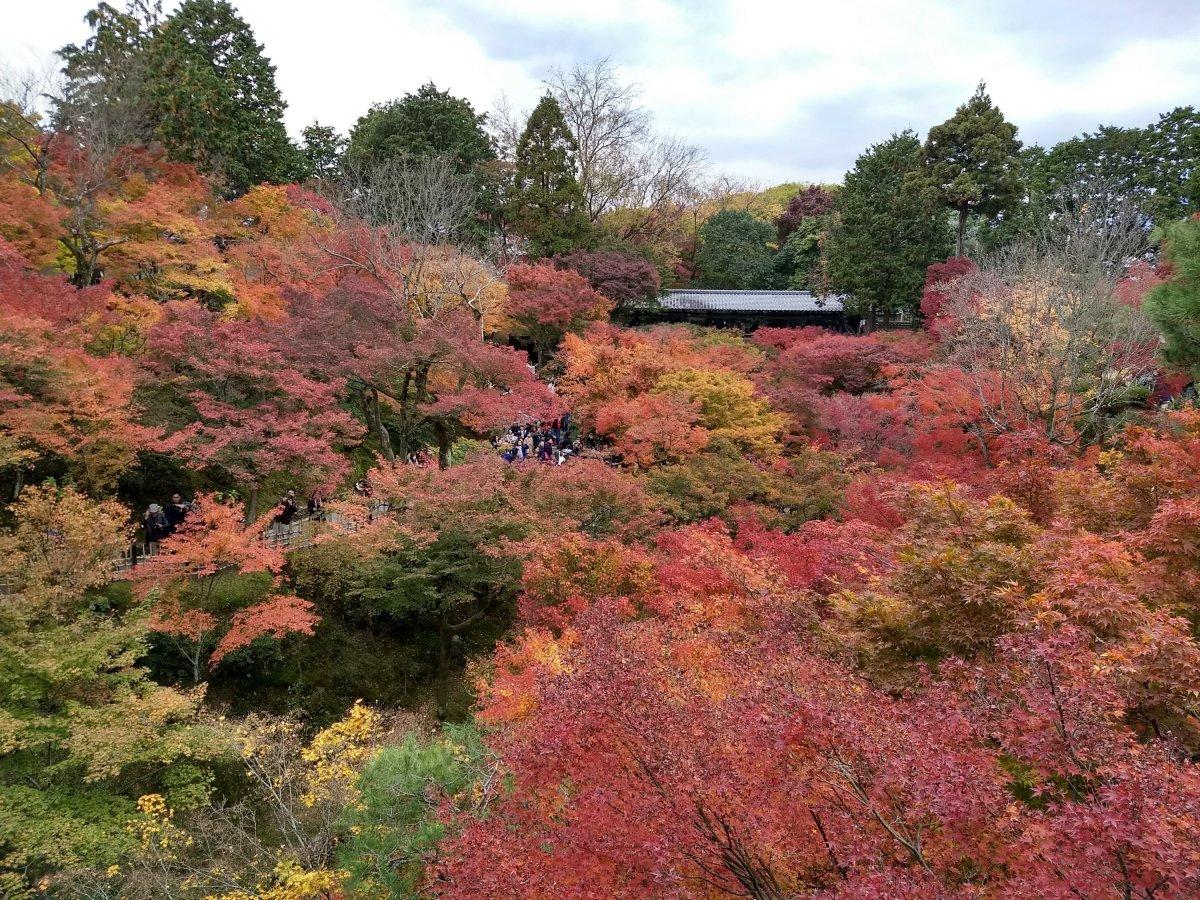 京都東福寺楓紅,攝於2017/11