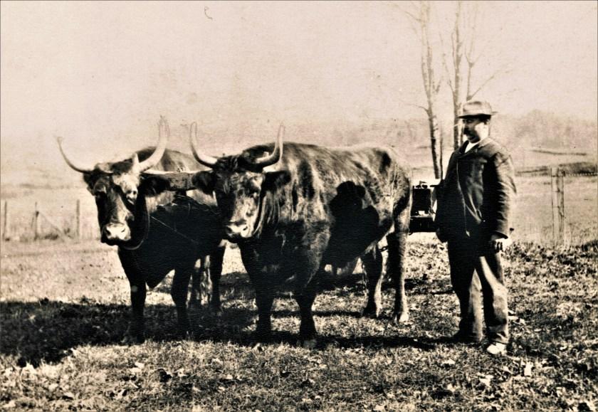 Easton HSE Orlando Banks Osborne & oxen (2)