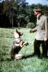 Hitler and Blondi.