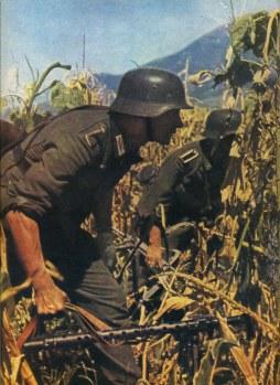 Crossing a corn field in the Caucasus.