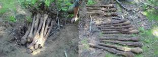 Recently discovered buried Panzerfaust.