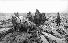 Horses in mud, March 1942.