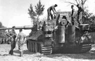 Bullet scared Tiger 1.