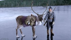 Finnish soldier with a pack Reindeer, on an ice covered lake, near the tiny village of Nautsi, in northern Lapland, Finland.