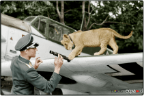 Leutnant Franz von Werra, Adjutant of 11JG 3. He is seen here with the Gruppe lion cub mascot Simbaand and a Messerschmidt Bf 109 E-4 at Wierre-au-Bois in France, August 1940.