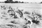 RAD members working in the field, East Prussia, 1938.