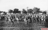 Camel cavalry, German Southwest Africa, 1904.