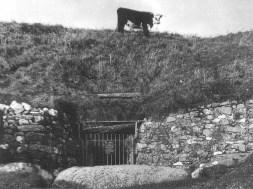 newgrange-cow-1024x769