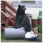 275-BLACK-BEAR-GARBAGE