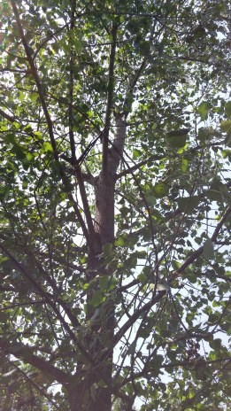 Closer view of Son of Dreaming Tree