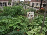 We have six different lots with many different kinds of gardens planted, from herbs to fruit trees.