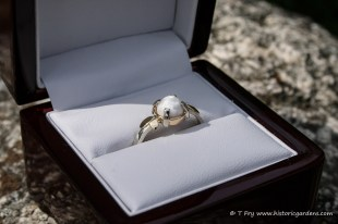 Scallop Pearl Ring handcrafted by Craig Fancy, donated by Fancy Jewellers.