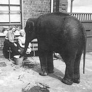 Identiteit olifantenbeschermster WOII achterhaald