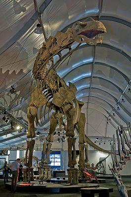 Argentinosaurus - Foto: CC