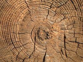 Jaarringen van een boom