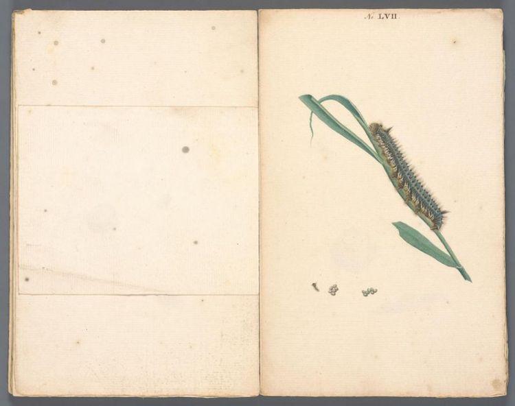 Anoniem, Handschrift met tekeningen van rupsen, ca. 1754-1758, collectie Teylers Museum