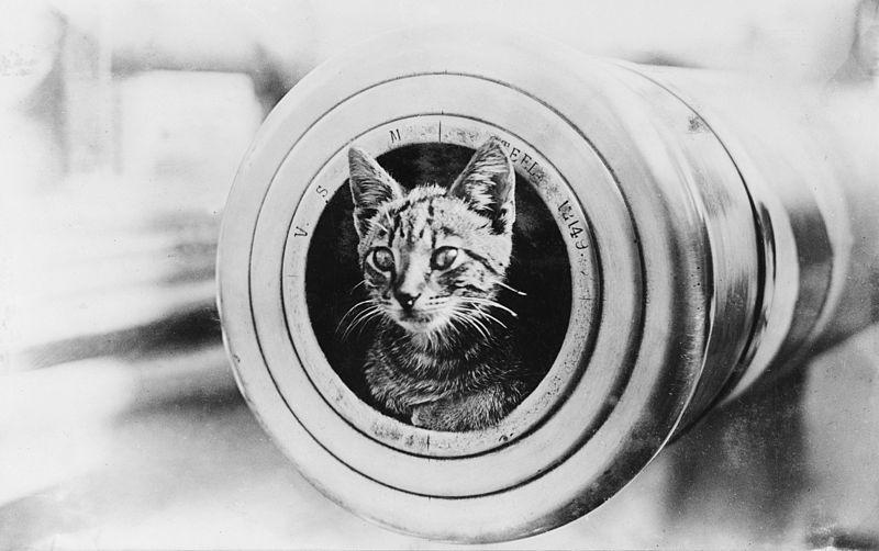 Kat aan boord van de HMAS Encounter tijdens de Eerste Wereldoorlog  - cc