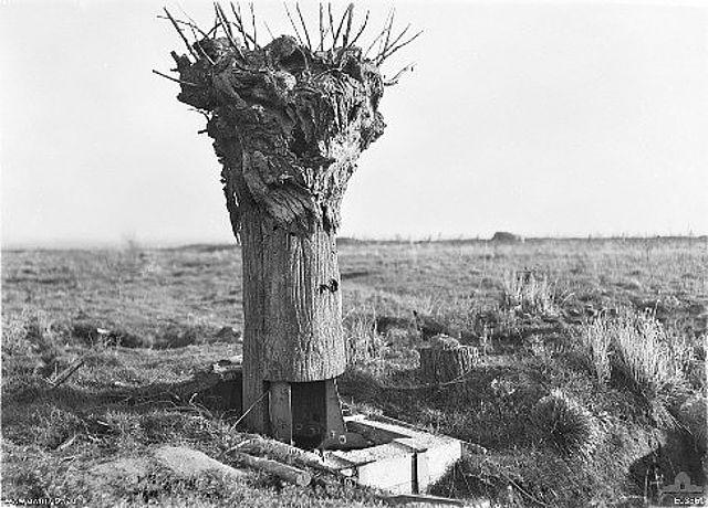 Baumbeobachter
