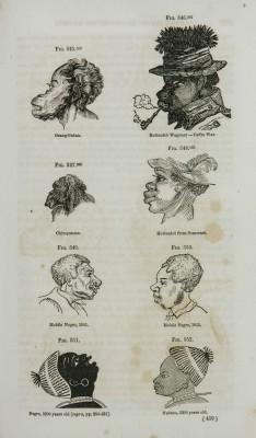 Verschillende 'negro faces' uit de literatuur die door de racisten Nott en Gliddon werden opgevoerd om het grote verschil met beschaafde Griekse koppen aan te tonen (Nott & Gliddon, Types of Mankind 1854, coll. Teylers Museum)