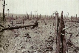 Delville Wood, september 1916 (delvillewood.com)
