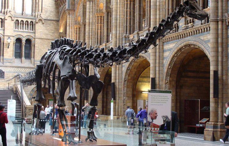 Dippy in het Natural History Museum - cc