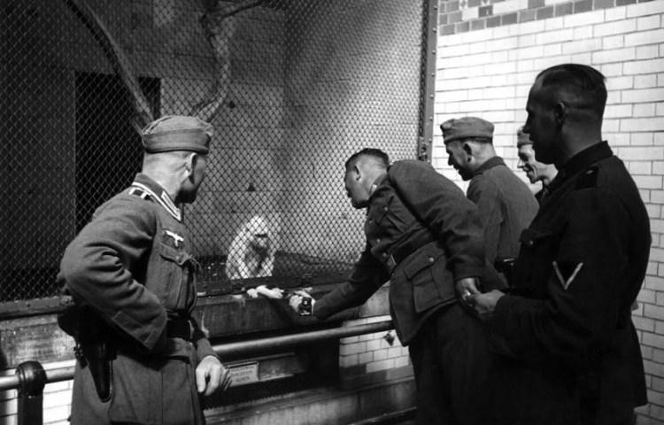 """Duitse militairen voederen aan aapje in het monumentale Apenhuis. Eén van de bekendste onderduiksters van Artis was de joodse mevrouw Duif van de Brink. Oppasser Van Schalkwijk van het apenhuis: """"Ze heeft hier vier jaar lang gezeten, tot het einde van de oorlog. Ze zat bijna altijd op het bankje van het apenhuis. 's Nachts was ze ook bij ons, dan had ze een slaapplaats in het wolvenhuis. 's Morgens kwam ze van het wolvenhuis naar het apenhuis voor haar natje en droogje. Op dat bankje bij de apen zat ze altijd met mensen, ook met Duitsers, te praten. Ze hebben haar altijd met rust gelaten, niet wetende dat het een jodin was"""". (foto Spaarnestad Photo)"""