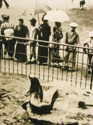 Vooroorlogse foto van Ueno Zoo (Wikipedia / Publiek Domein)