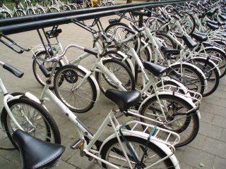 Witte fietsen in Nationaal Park de Hoge Veluwe - cc