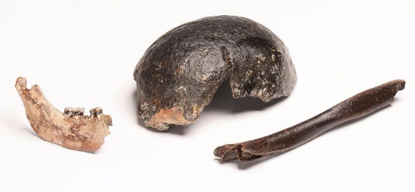 Botmateriaal Mesolithische Doggerlandbewoners (Foto en collectie Rijksmuseum van Oudheden)