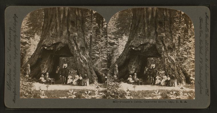 De Pioneer Cabin Tree rond 1867