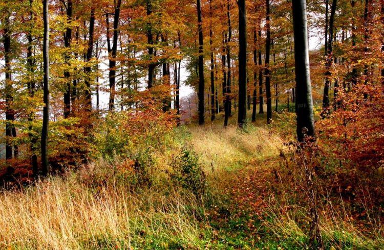Herfst in het Teutoburgerwoud - cc