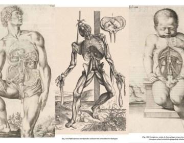 Tekeningen uit Anatomia (Paul Broos)