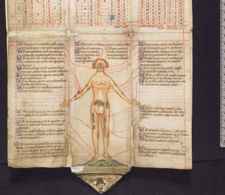 Aderlatingsman in Harley MS 5311, ca. 1406 (British Library)