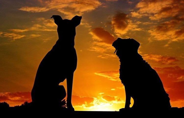 Hondsdagen (cc - Pixabay - cocoparisienne)